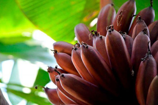 как выбрать бананы