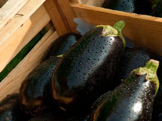 пасленовые овощи