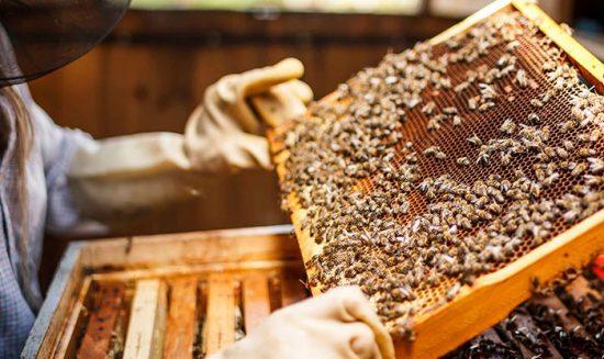 уход за семейством пчел