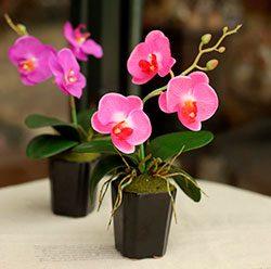 как посадить орхидею