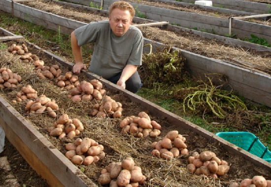 как посадить овощи