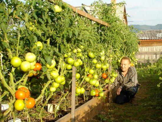 методика получения хорошего урожая