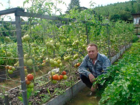 оборудование грядок для овощей
