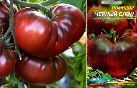 крупноплодные помидоры черный слон