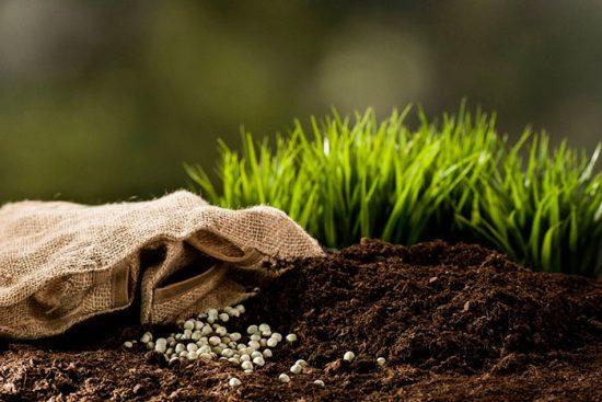 калий для огородных культур