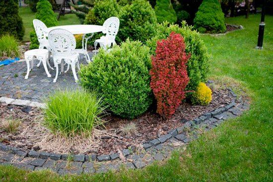 барбарис в саду