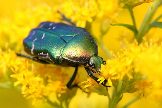 народные средства борьбы с жуками
