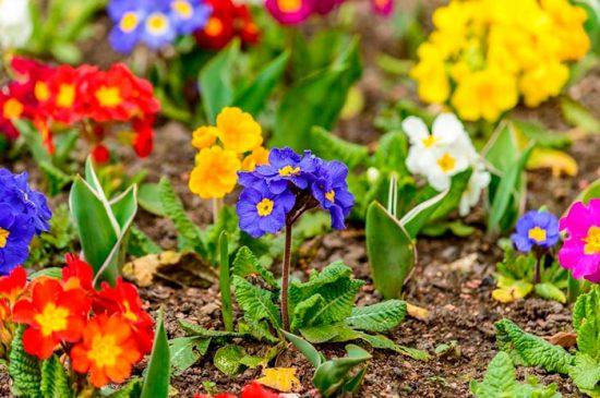 цветущие многолетние растения