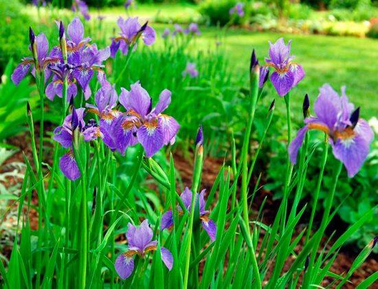 какие цветы выбрать для сада