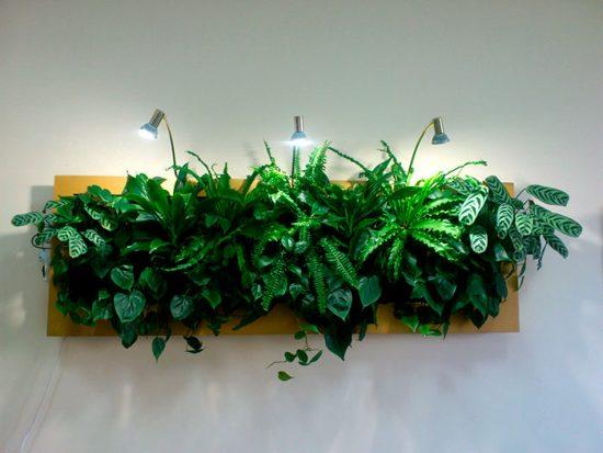 что такое стабилизированные растения