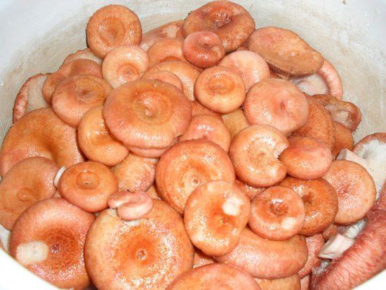 вымачивание грибов