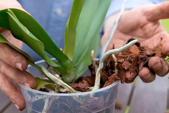 почва для орхидеи