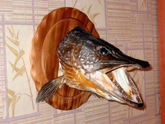 голова рыбы на подставке
