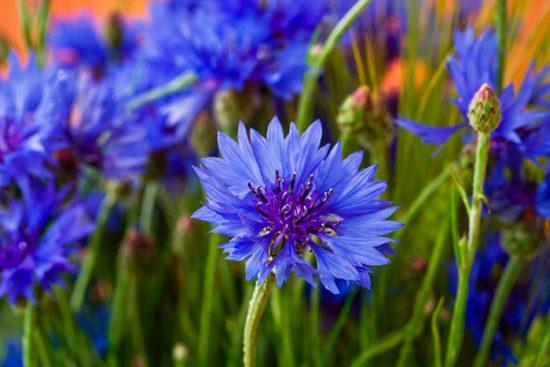 как посадить цветы зимой
