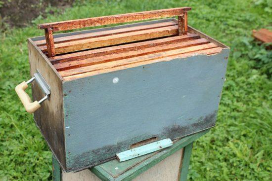 основы пчеловодства