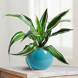 растения для выращивания в квартире