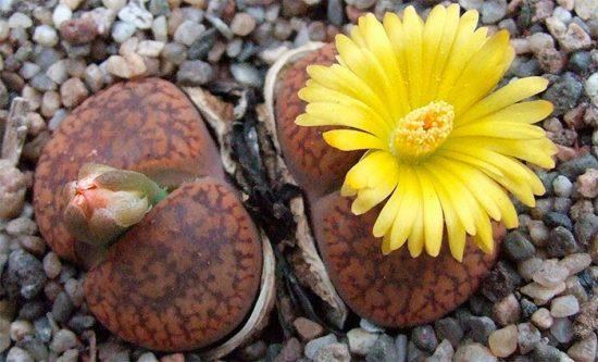 необычные цветы на подоконнике