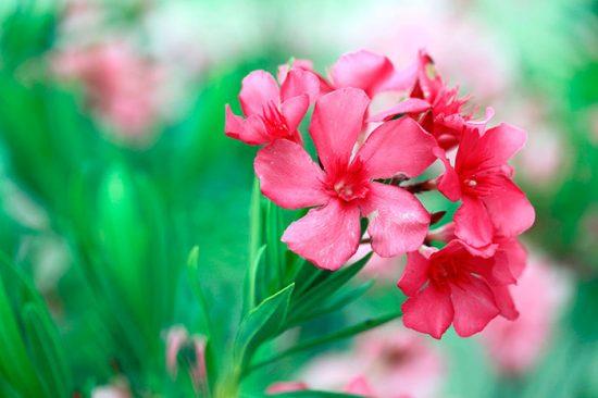 как пересадить цветы дома