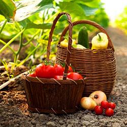 что такое органическое земледелие