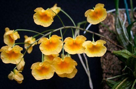 виды экзотических цветов