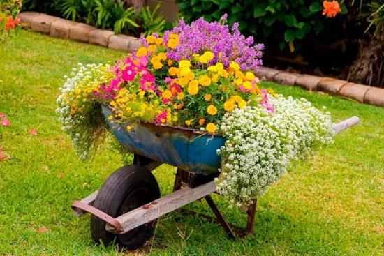как посадить желтые цветы