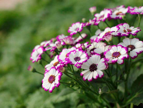 цветки похожие на ромашку