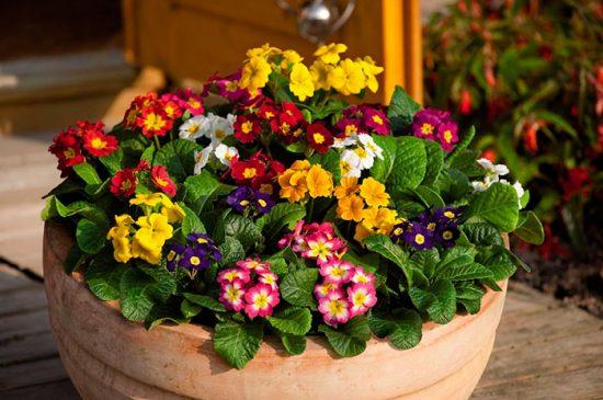 посадка цветов оченью