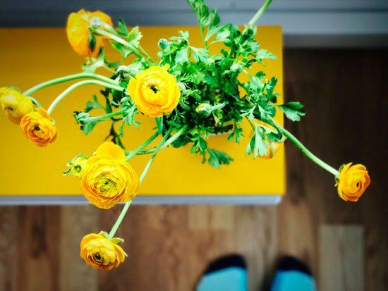 культура с желтыми цветками