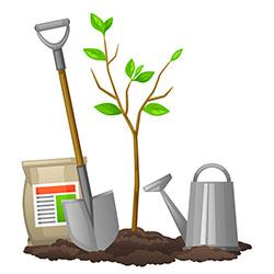 как удобрять деревья