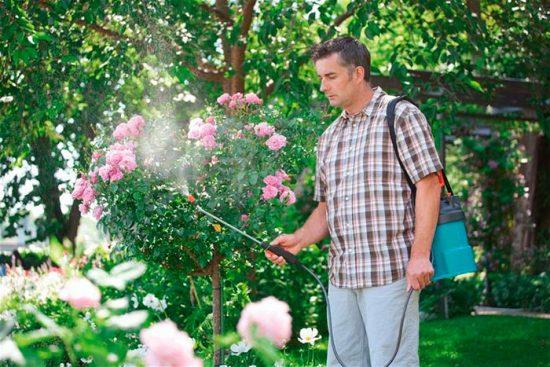 как опрыскивать сад