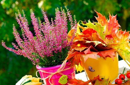 как посадить однолетние цветы