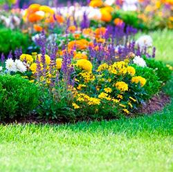 цветущие растения в саду