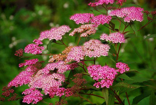 уход за цветущими растениями