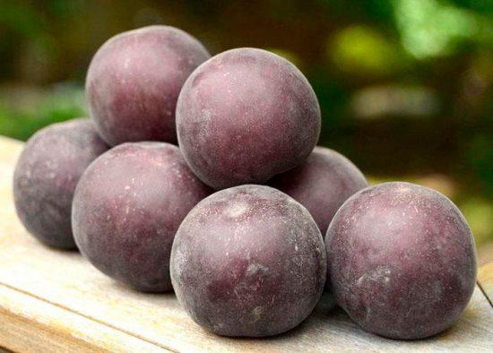 сорт черных абрикосов