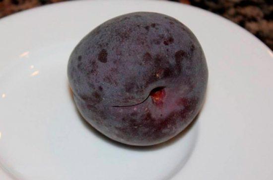 сортовой абрикос