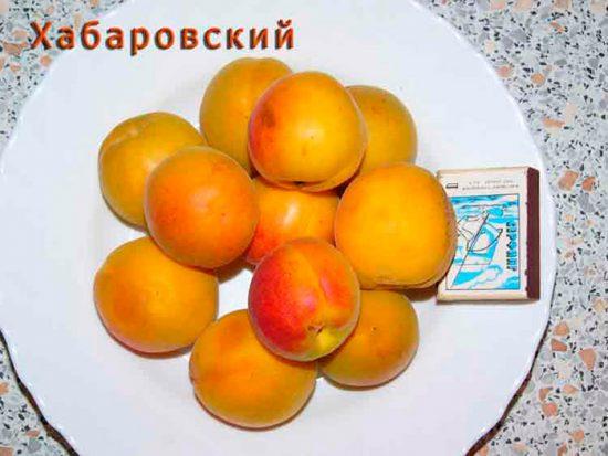 плоды сорта хабаровский