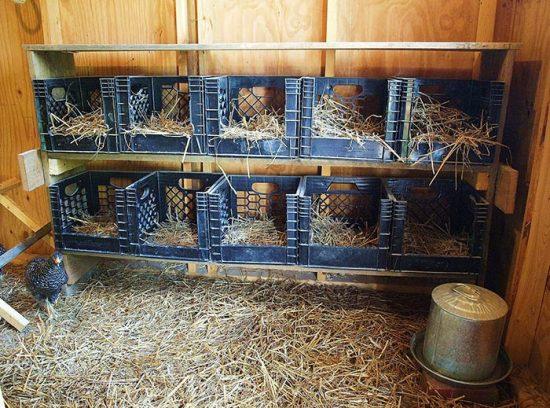 гнезда из пластиковых ящиков