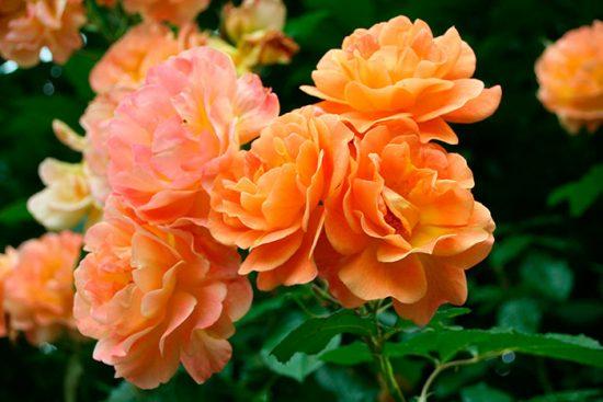 виды цветов