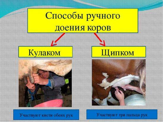 уход за животными