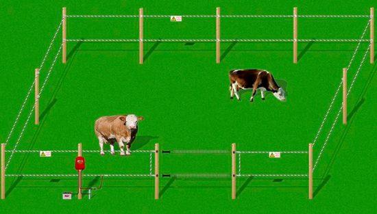 пастбище для коров