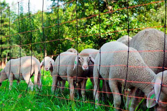 заграждение для овец
