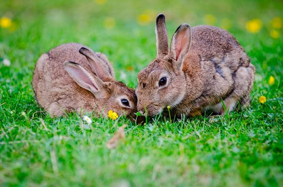 уход за кроликами