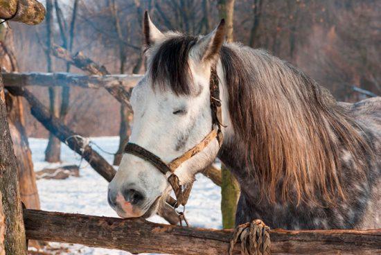конь дремает