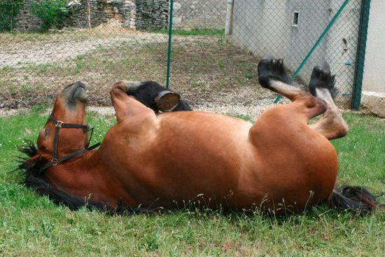 сон коня