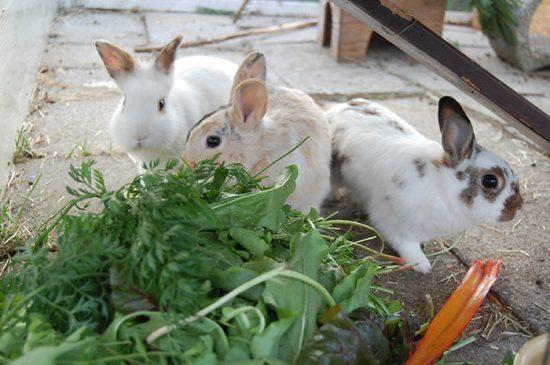 питание для домашних животных