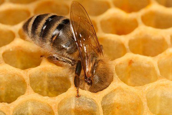 пчелиная сота