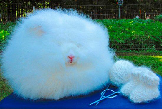 шерсть кролика