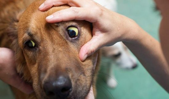 болезни домашних животных