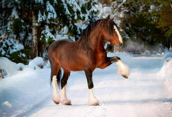 породы коней