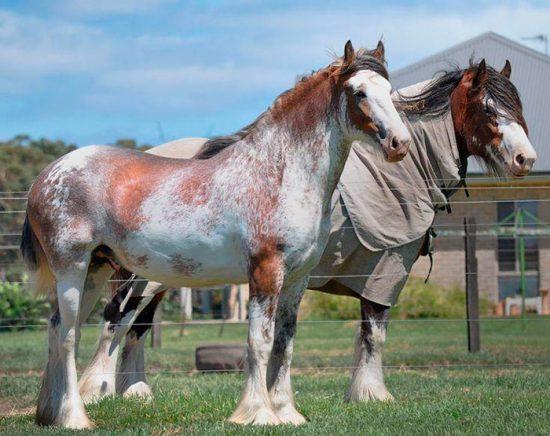 конь необычной окраски